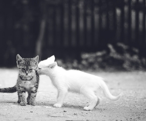 cat, love, and black and white image