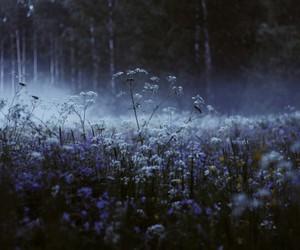 flowers, dark, and nature image