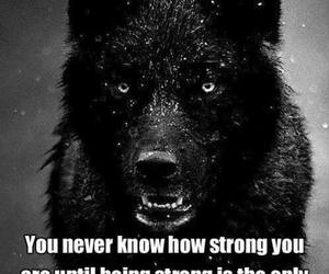 quotes, strong, and wolf image