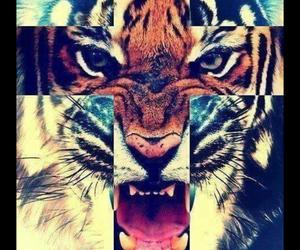 tiger, cross, and animal image