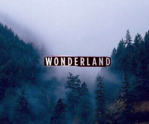 adventure, forest, and wonderland image