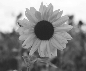 black and white, vintage, and flower image