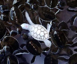 turtle, white, and animal image