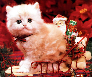 cat, christmas, and kitten image