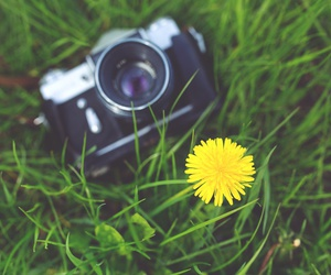 camera, flowers, and grass image
