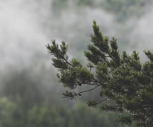 fog, forest, and mysterious image