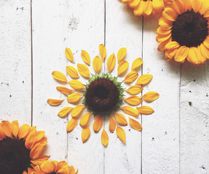flower, sunflower, and vintage image