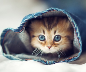 cat and jeans image