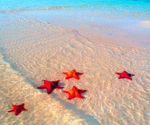sea, beach, and starfish image