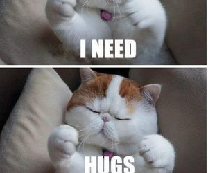 cat, hug, and cute image