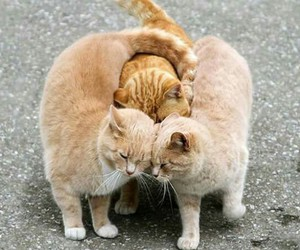 cat and animal image