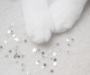cat, star, and white image