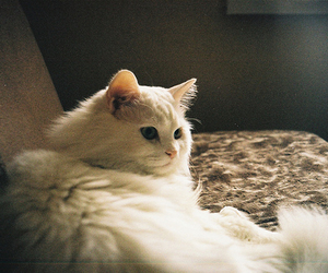 cat, white cat, and cute image