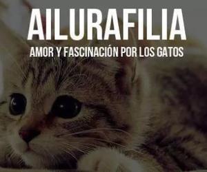 Gatos, ailurafilia, and cat image