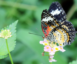 butterfly, flower, and sommerfugl image