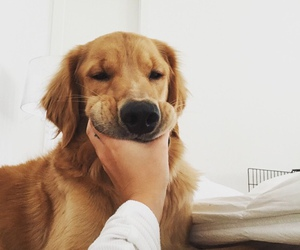 adorable, dog, and happy image