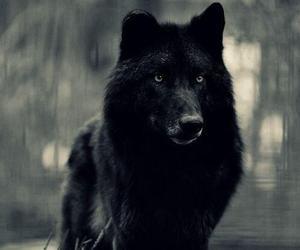 chien, magnifique, and loup image