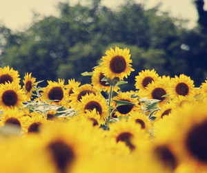 grunge, sunflowers, and tumblr image