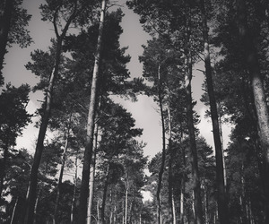 forest, black and white, and photography image