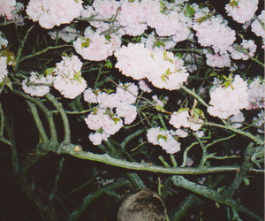 boy, vintage, and flowers image