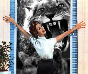 Collage, window, and lion image