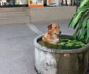 funny, dog, and animal image