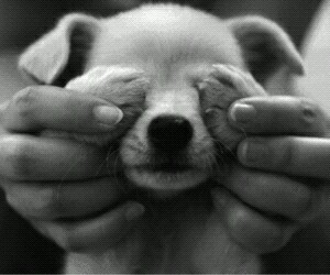 adorable, black and white, and cute image