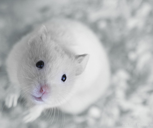 animal, white, and cute image