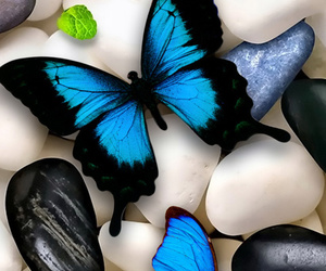 beautiful, butterfly, and cover photo image