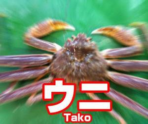 シュール, たこ, and おもしろい image