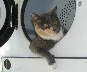cat, funny cat, and cat astronaut image
