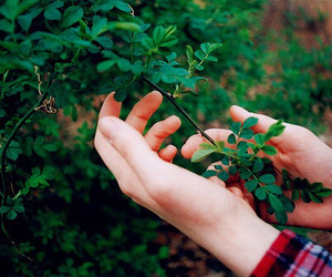 green, hands, and nature image