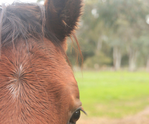 bay, horse, and photo image