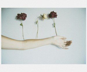 flower, hand, and paleness image