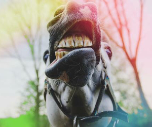 equestrian, funny, and happy image