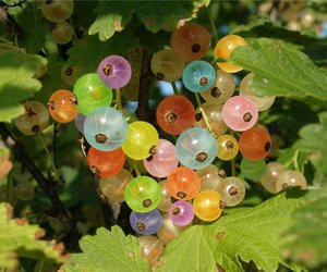 gooseberry and nature image