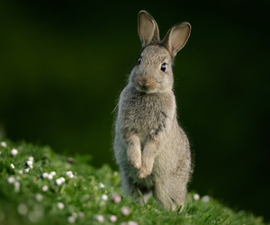 nature and rabbit image