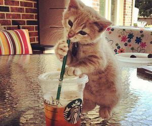 cat, cute, and starbucks image