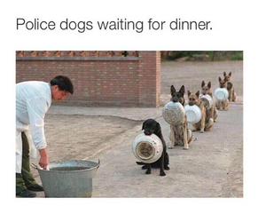 love, dinner, and dogs image