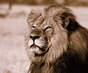 cecil and lion image