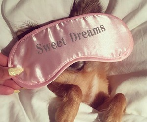 dog, cute, and Dream image