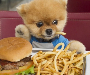dog, cute, and food image