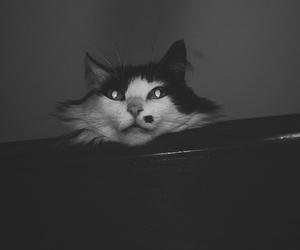 cat, pandora, and mons7ro image