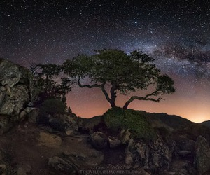 galaxy, milky way, and tree image