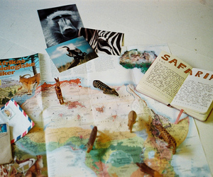 animal, map, and photography image