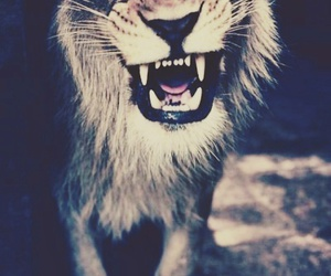 lions, staystrong, and lowen image