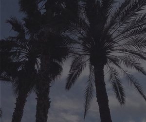 aesthetic, cool, and palmtrees image