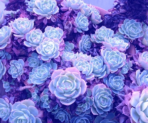 background, plants, and purple image