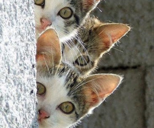 cat, animal, and kitten image
