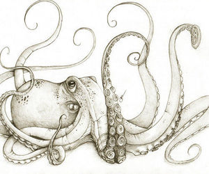 octopus, art, and drawing image